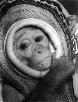 Miss Sam the Rhesus Monkey - 1960