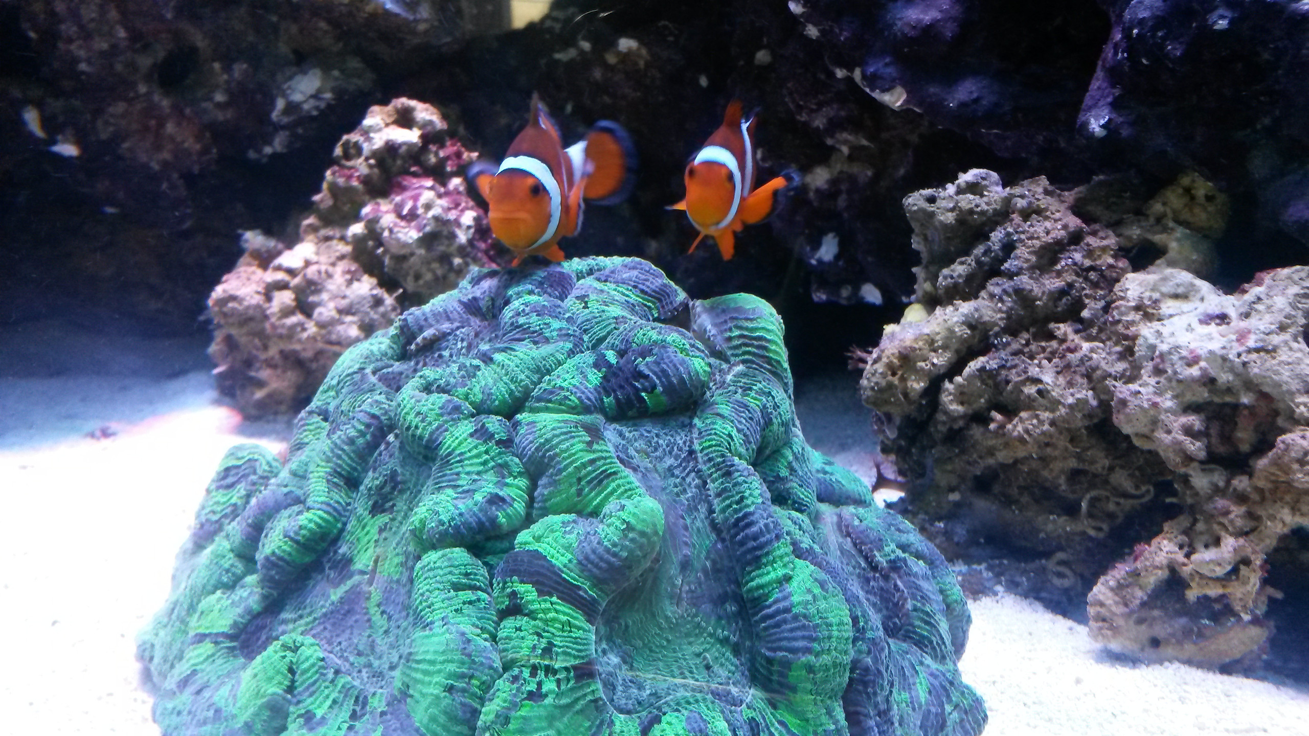 27-Happy Fish in New Home
