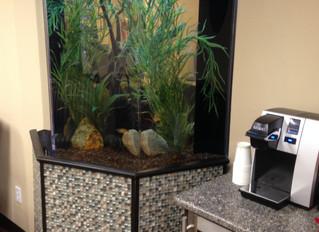 Setting up a Giant Acrylic Freshwater Aquarium