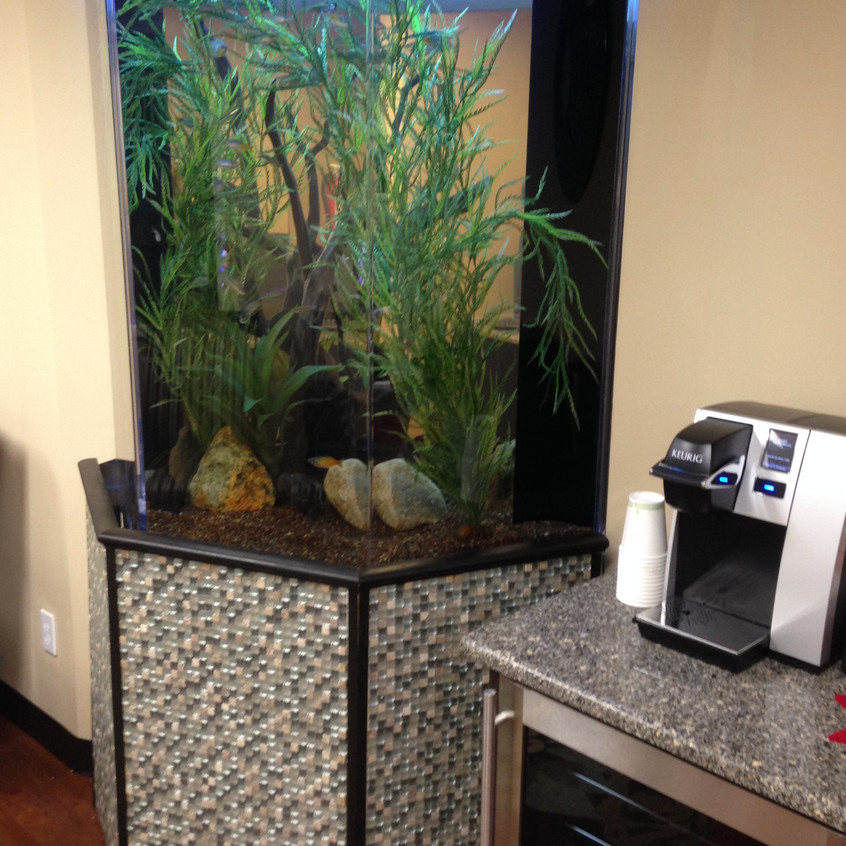 15-Finished FreshWater Aquarium Install
