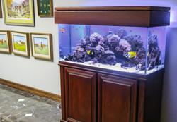 Aquariums-8