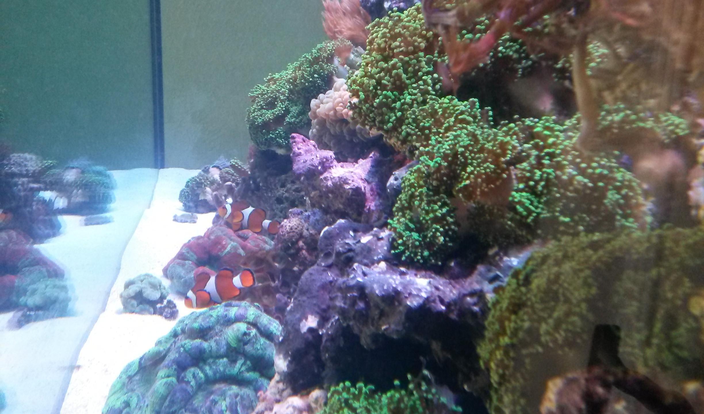 25-Side View SaltWater Reef Aquarium
