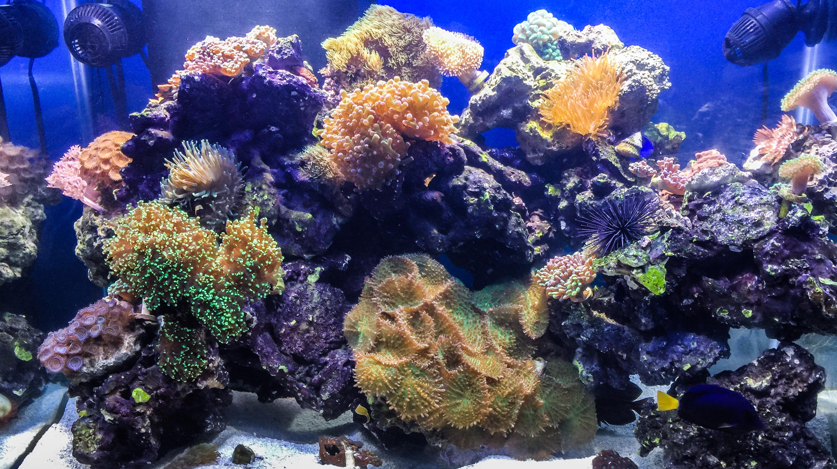 Aquariums-25