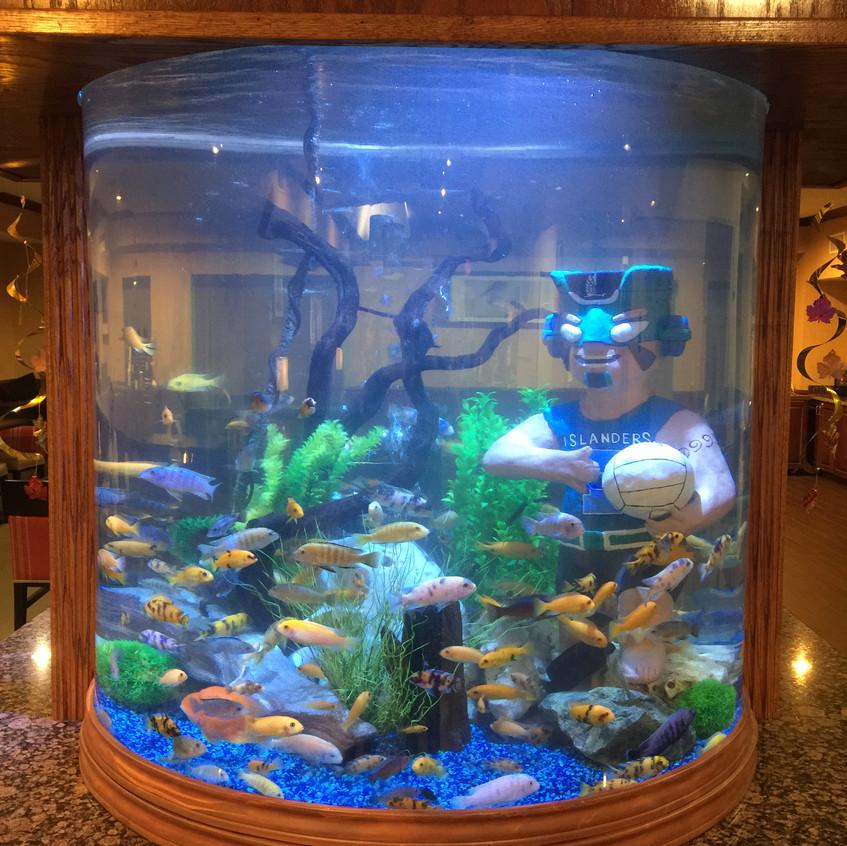 13-Izzy in Full Aquarium