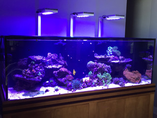 Custom Cabinetry for a New Reef Tank.