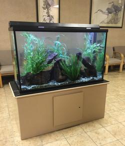 Aquariums-31