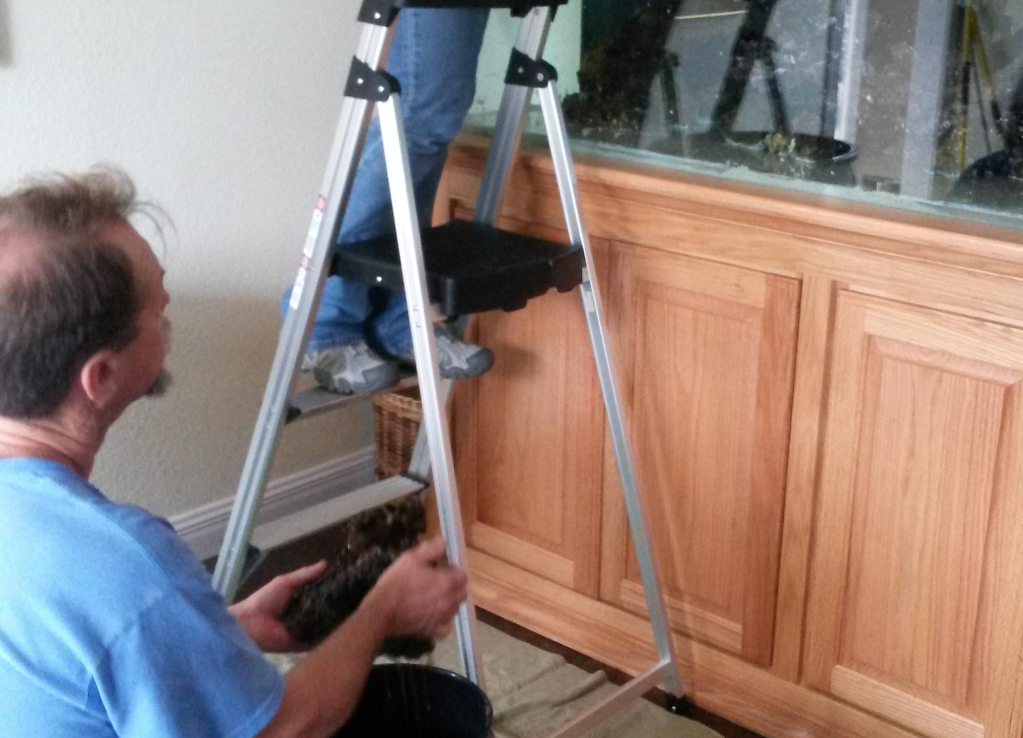 20-ReStocking of Coral LiveStock