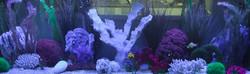Aquariums-28