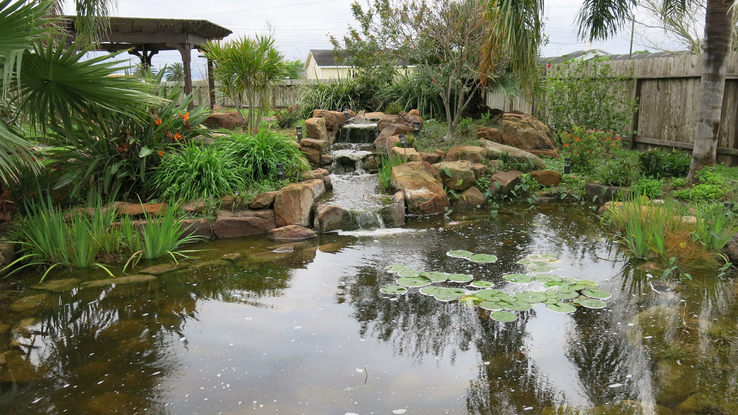 1-Backyard Pond