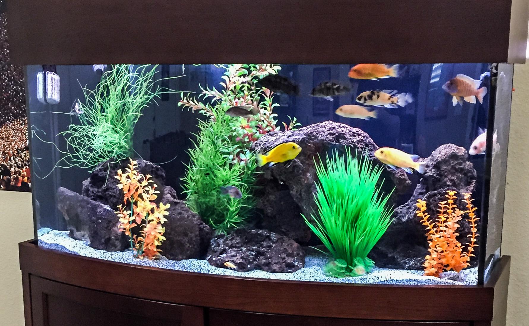 Aquariums-22
