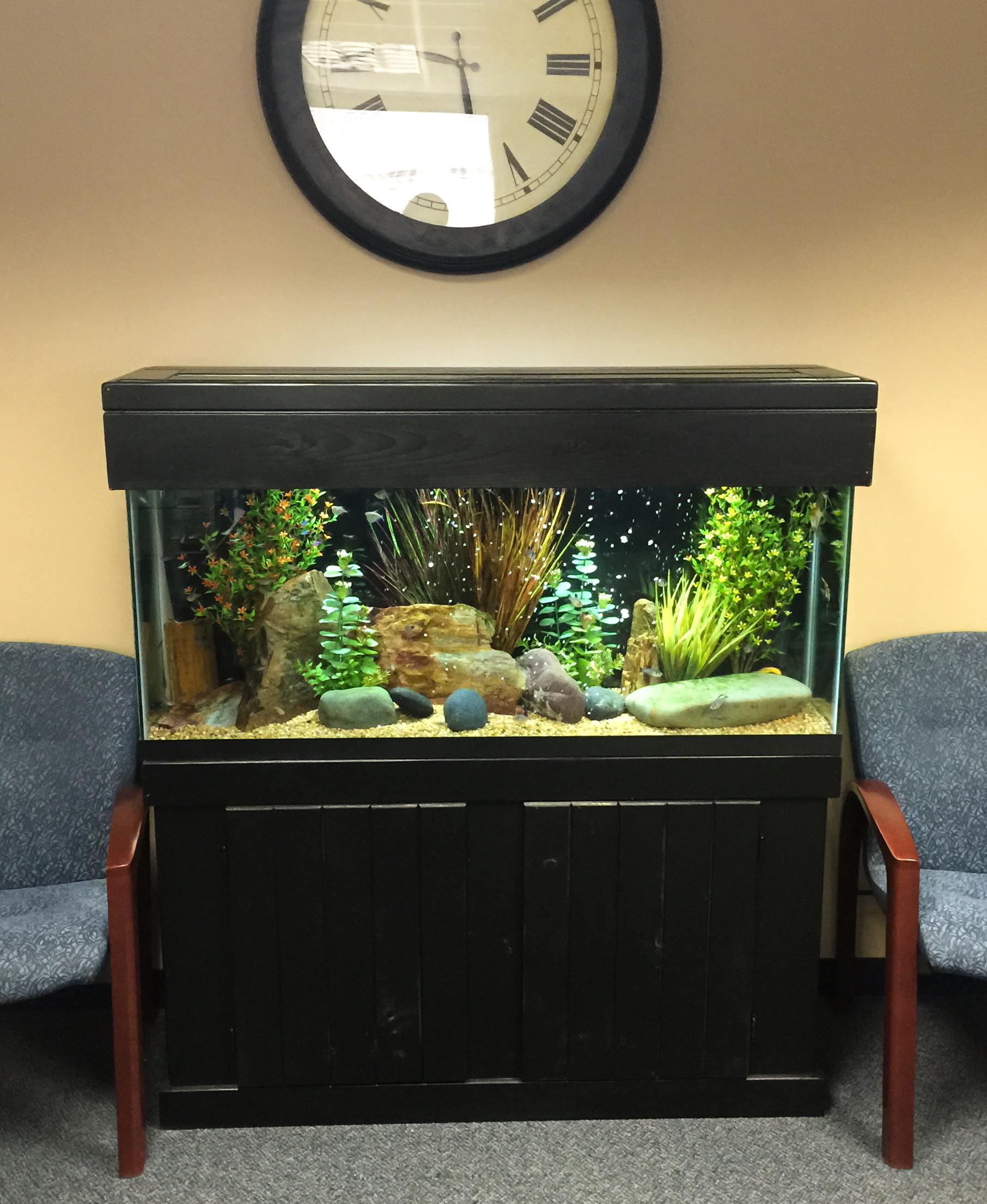 Aquariums-16