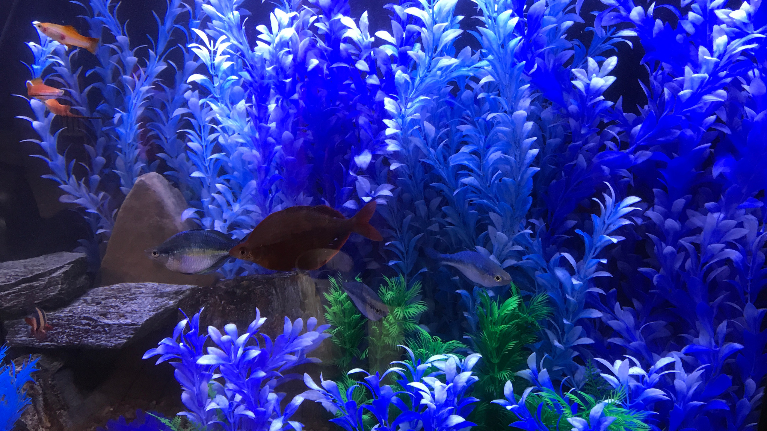 6-Fish Show Their Fan Colors