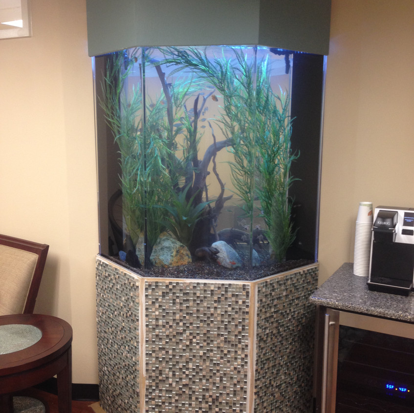 13-FreshWater Aquarium