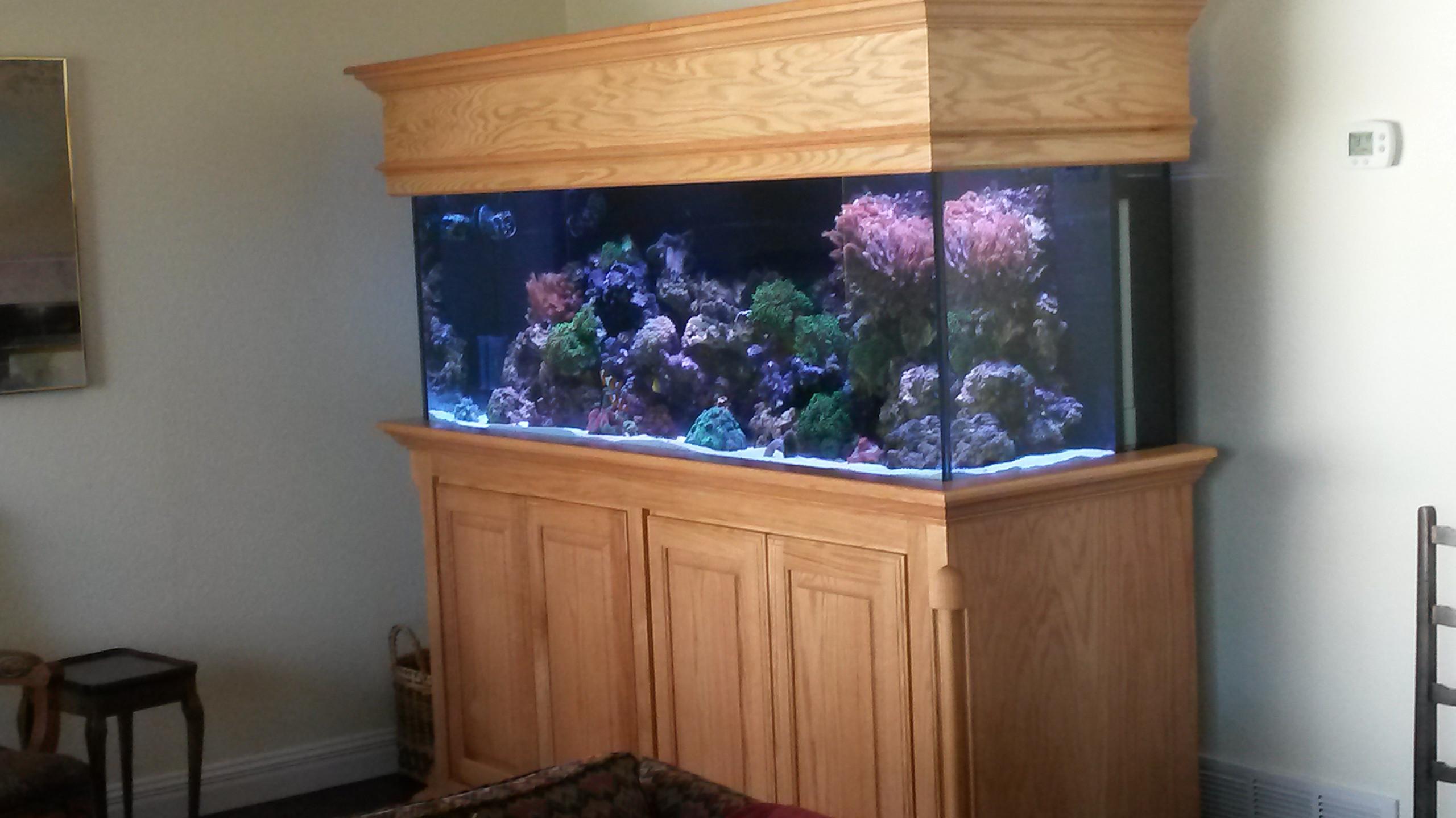 26-UpGraded SaltWater Reef Aquarium