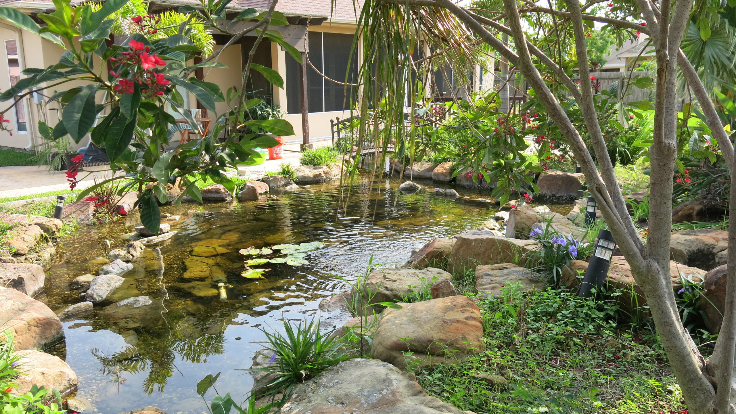 36-Finished Backyard Pond