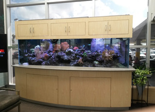 BMW of CC Reef Install