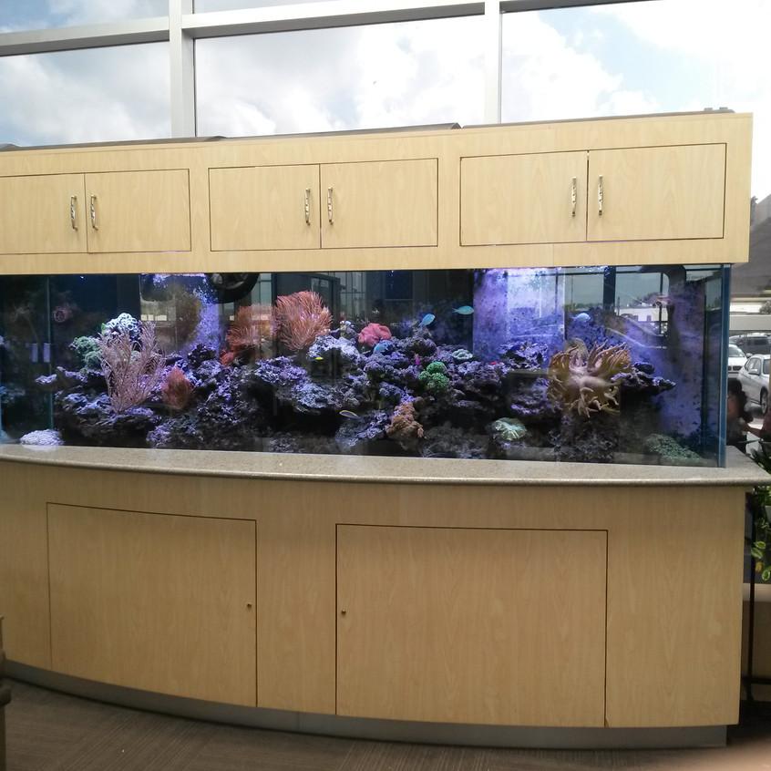 15-Finished SaltWater Reef Aquarium Set-Up