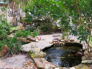 Backyard Escape Gets Much Needed Deep Clean and New Filtration System