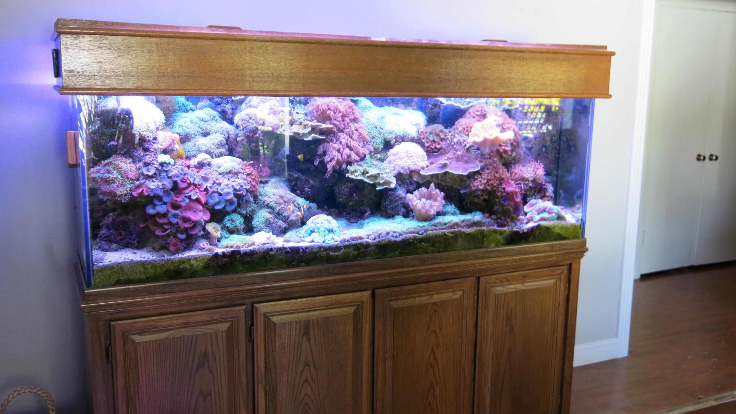1-Original SaltWater Reef Aquarium
