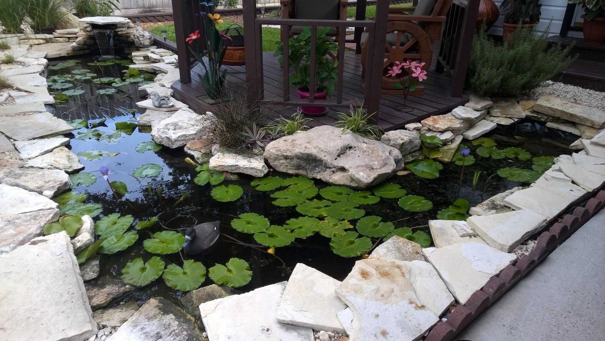 31-Finished Pond