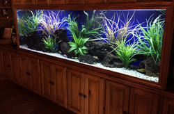 Aquariums-23