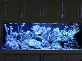 Huge In-Wall Aquarium Install in Custom Cabinetry