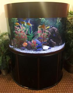 Aquariums-27