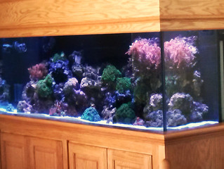 An Old Aquarium Gets a Much Needed Upgrade After 20 years