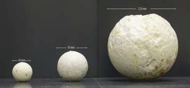 Mycelia Material Bionomics