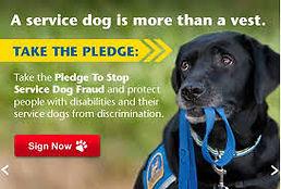 Serv Dog Fraud.jpg