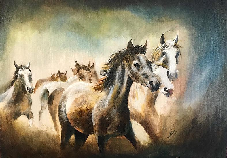 Horse Gallop