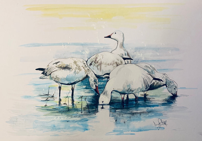Arctic Geese