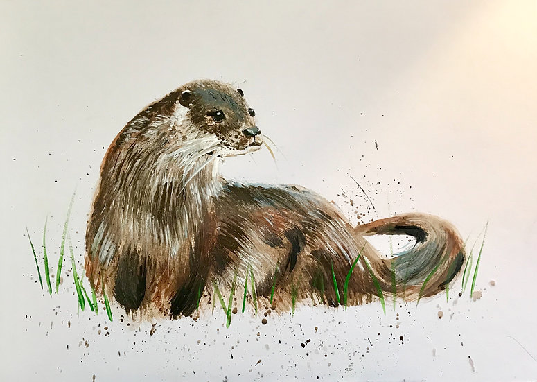 Splash Otter