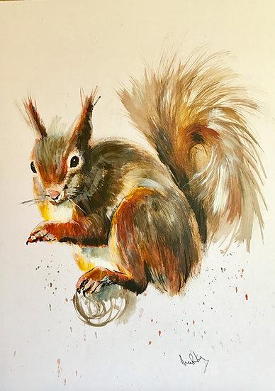 Splash Squirrel 2