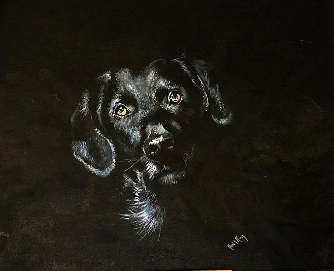 Soulful Labrador