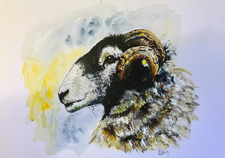 Sheep Side