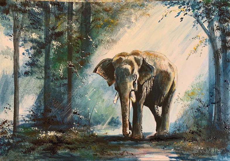 Sunlit Elephant
