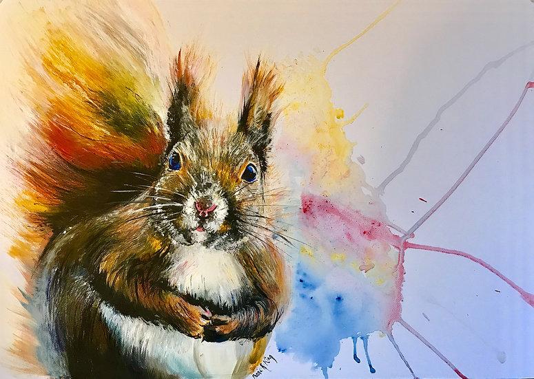 Colour Squirrel