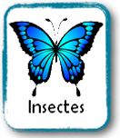 Insectes.png