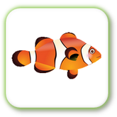 PointsRelierPoissons.png