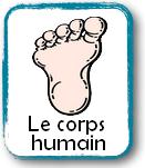 CorpsHumain2.png