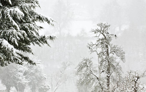 Snowy-trees-low-res.jpg