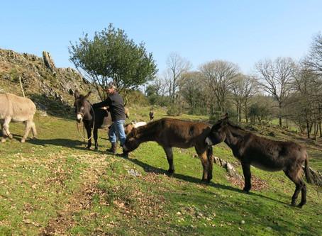 Dimanche 19 Mai 2019 : Les âniers du Pays Gallo en fête
