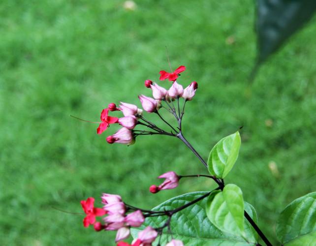 #030 ödesträd, granada, nicaragua