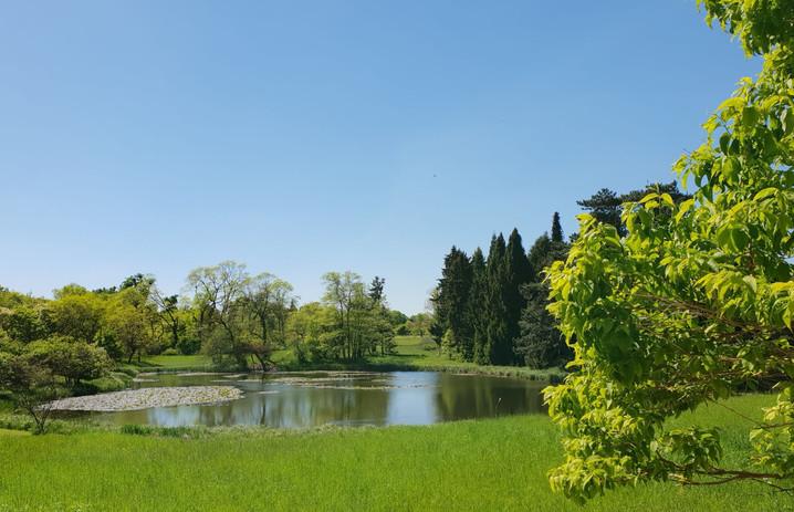 #507 dammen i botaniska trädgården, berlin