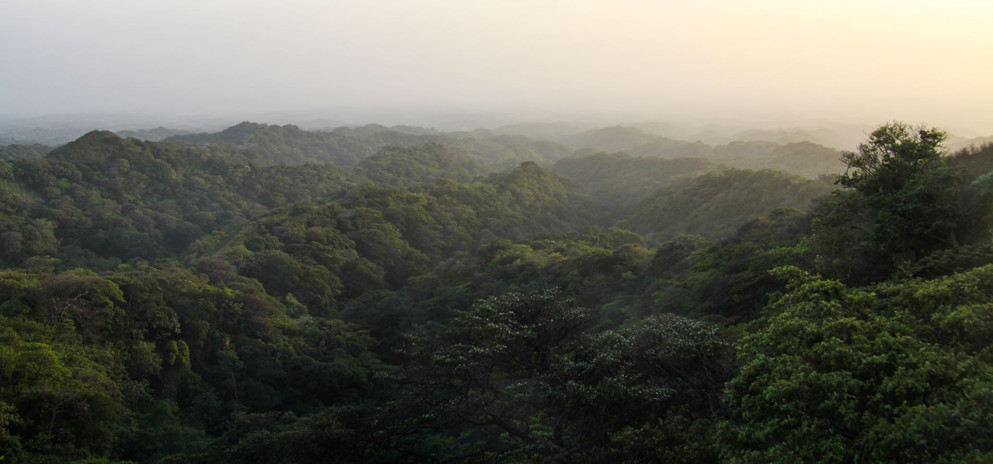 #017 skogslandskap, el crucero, nicaragua
