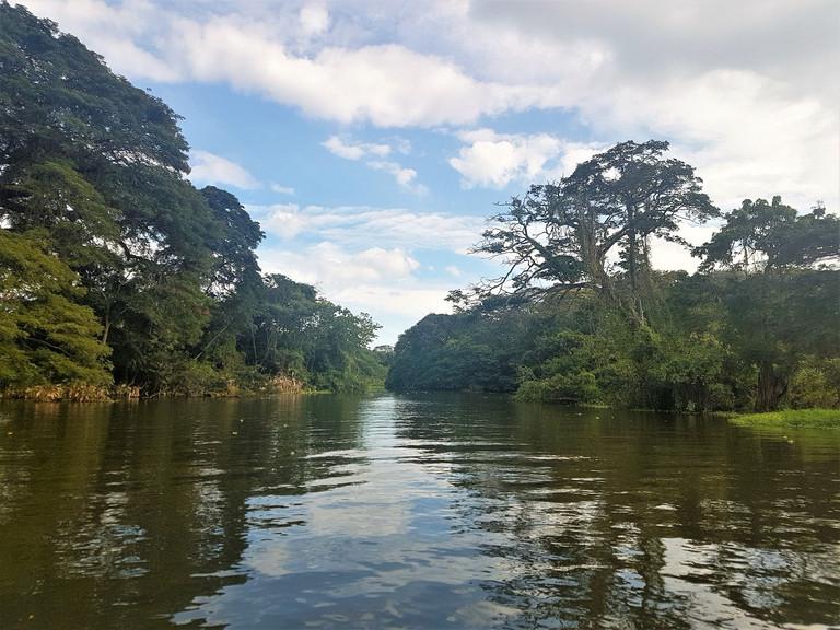 #005 tropisk vegetation, las isletas, granada, nicaragua