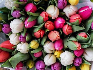 Tulips galore.jpg
