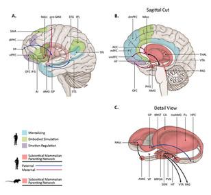 The Parental Brain