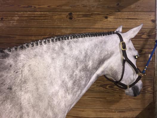 Winter Equestrian Festival 2018